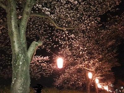 seki桜2.jpg